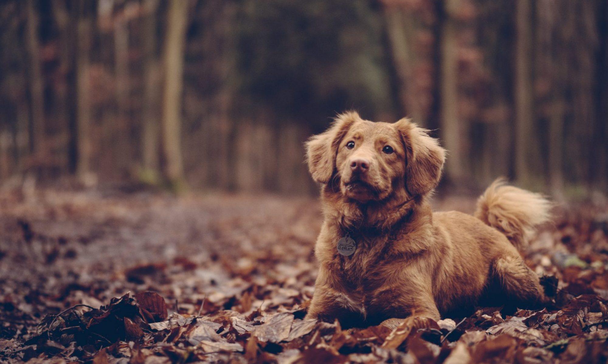 Bækkelund Hundepension