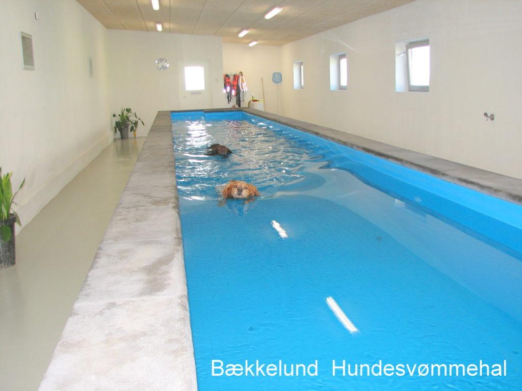 Hundesvømmehal