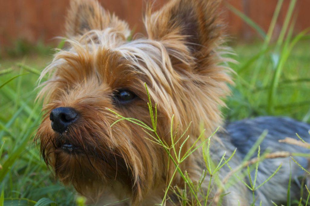 Fysioterapi og hundefrisør